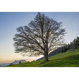 Doppelkarte Art Bula, 122x175 mm, Baum, Blanko