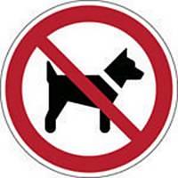 Brady P021 verbodsteken honden of dieren verboden, zelfklevend, 315 mm, per stuk